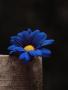 Blue Sunflower wallpapers