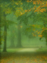 Morning Green Nature wallpapers