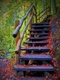 Steps In Nature wallpapers