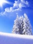 White Nature wallpapers