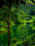 Green Water wallpapers