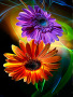 Color Sunflower wallpapers