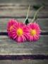 Lovely Flower wallpapers