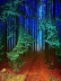 Blue Forest wallpapers