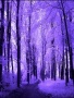Purple Forest wallpapers