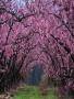 Pink Garden wallpapers