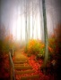 Autumn Fogg wallpapers