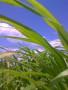 Grass Strip wallpapers