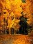 Golden Fall wallpapers
