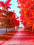 Autum Red wallpapers