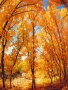 Tree Autumn wallpapers