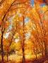 Tree Autumn wallpapers
