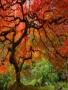 Big Tree Autumn wallpapers
