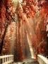 Autumn Sun wallpapers