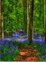 Forest Flower wallpapers