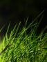 Green Grass wallpapers