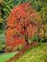 Autumn Tree wallpapers