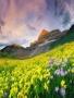 Flower Field wallpapers