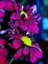 Neon Flowers wallpapers