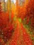 Autumn Walk wallpapers