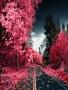 Pink Way wallpapers