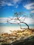Beach N Tree Free Mobile Wallpapers