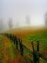 Misty Meedo wallpapers