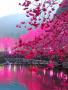 Beautiful Nature wallpapers