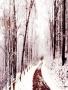 Winter Dream wallpapers