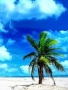 Beach Tree wallpapers