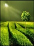 Green Night wallpapers