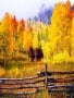 Yellow Autumn wallpapers