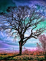 Dry Tree wallpapers