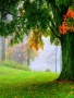 Maple Tree wallpapers