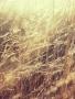 Field Grass wallpapers