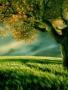 Grass N Lights wallpapers