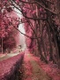 Pink Autumn wallpapers
