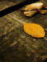 Yellow Leafs wallpapers