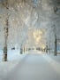 White Winter wallpapers
