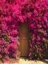 Door With Flowers wallpapers
