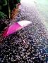 Pink Umbrella wallpapers