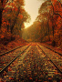 Autumn Track wallpapers