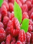 Raspberries wallpapers