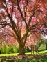 Lovely Tree wallpapers