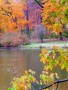 Autumn Trees wallpapers