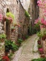 Garden Street wallpapers