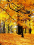 Nice Autumn Trees wallpapers