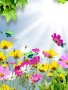 Colorful Flowers wallpapers