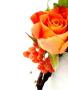 Orange Flower Free Mobile Wallpapers
