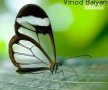 Vinod Balyan wallpapers